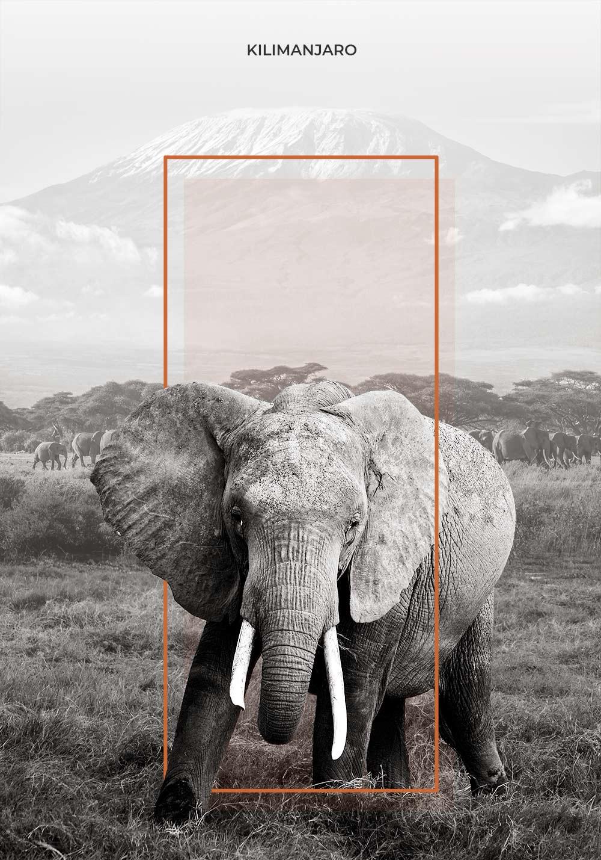 Adrián Espejo - Diseñador -Kilimanjaro